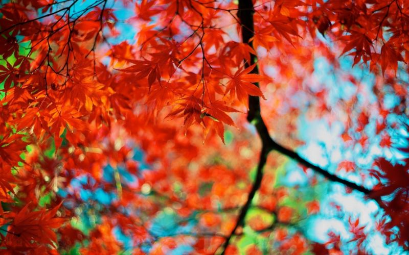 branches foliage leaves autumn colors wallpaper