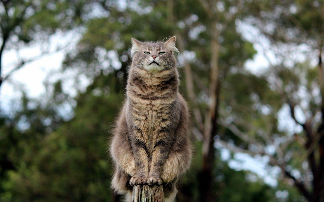 cat eyes posture wallpaper