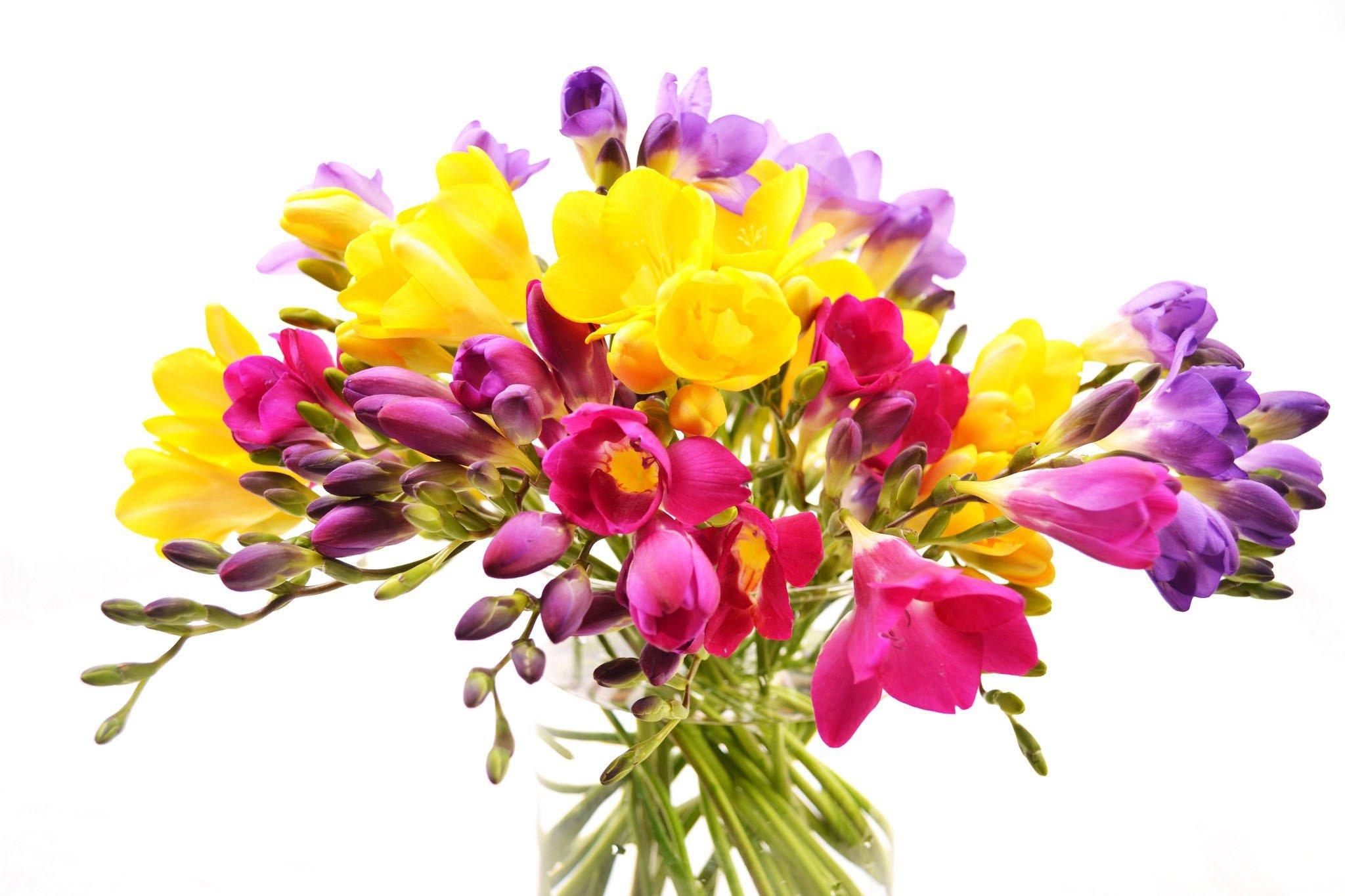 Flowers bouquet vase freesia white background wallpaper 2048x1365 flowers bouquet vase freesia white background wallpaper 2048x1365 335936 wallpaperup izmirmasajfo