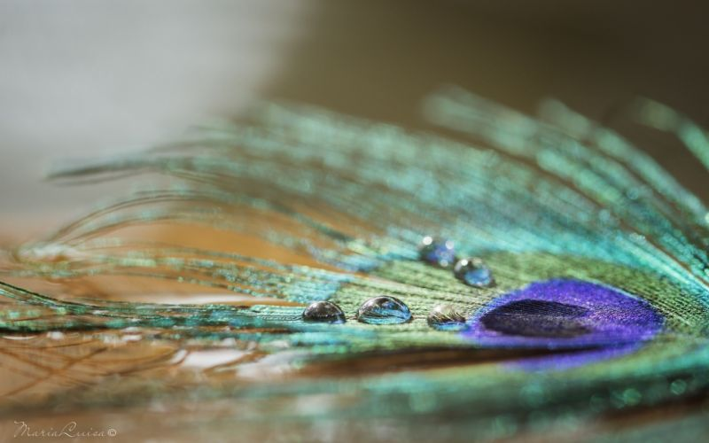 feather drops shine color close-up wallpaper