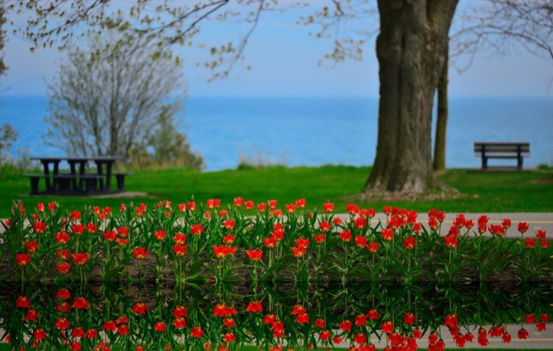 flowers tulips landscape reflection Lake Ontario Canada spring beauty reflection wallpaper