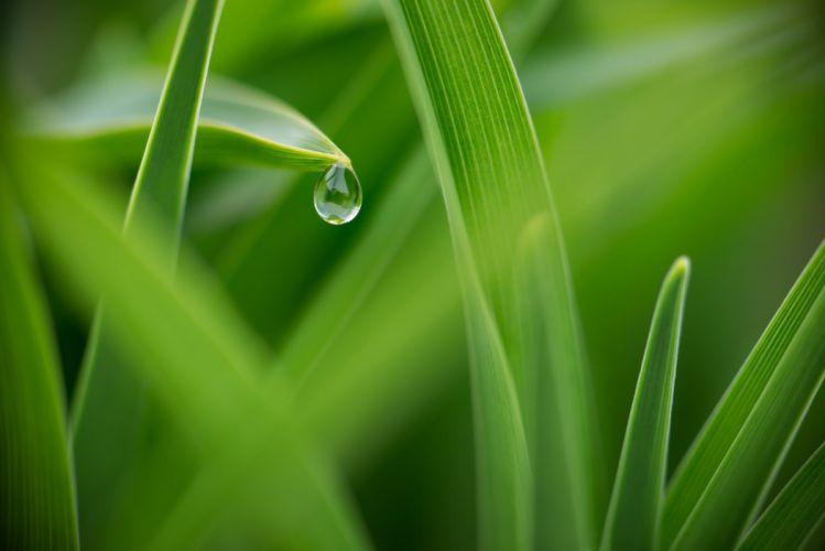 grass dew drops macro green wallpaper
