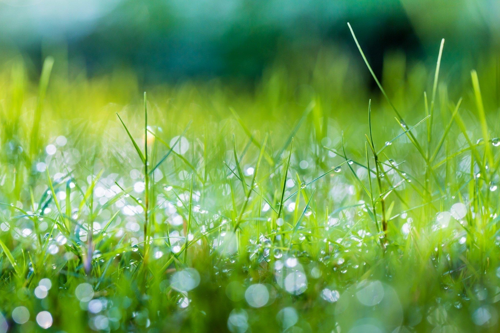 Spring Start Grass Dew Drops Shine Summer Macro Green Wallpaper