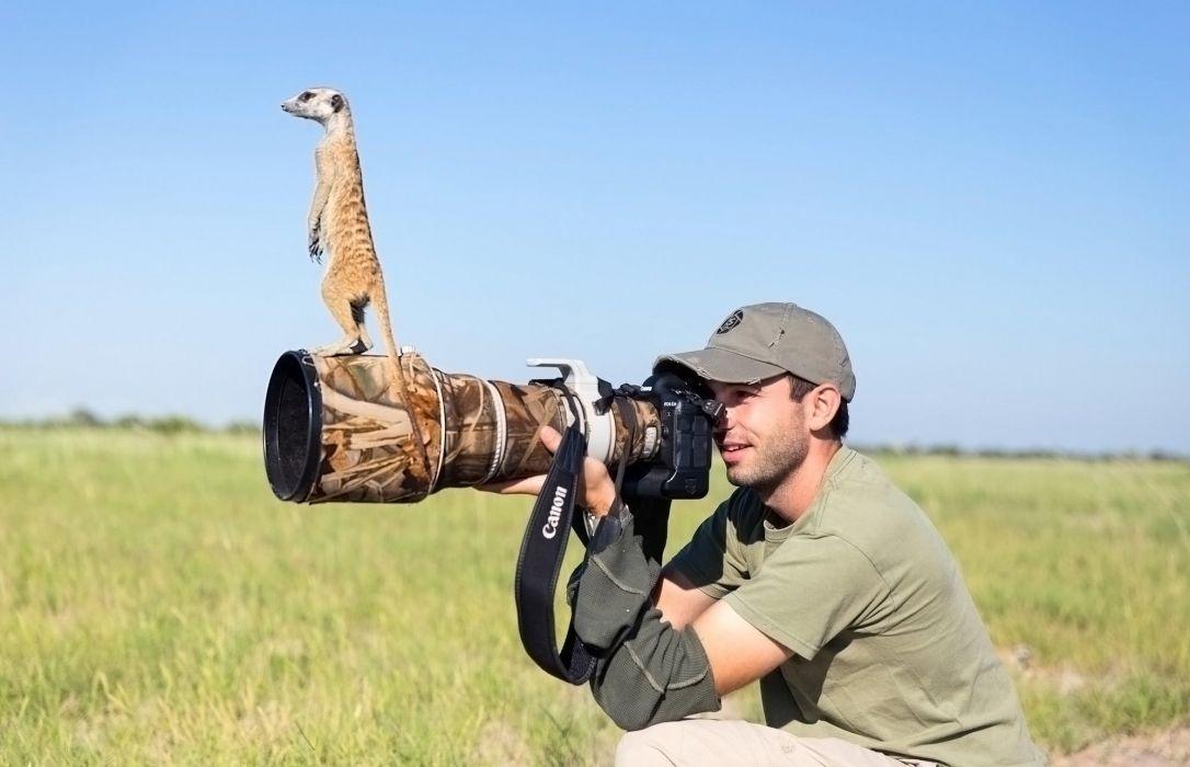 lens photographer meerkat camera humor funny wallpaper