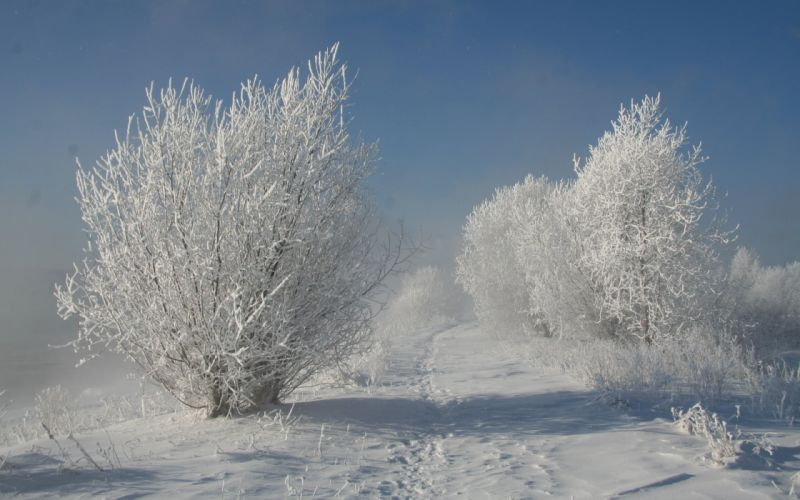 nature trees snow winter sky wallpaper