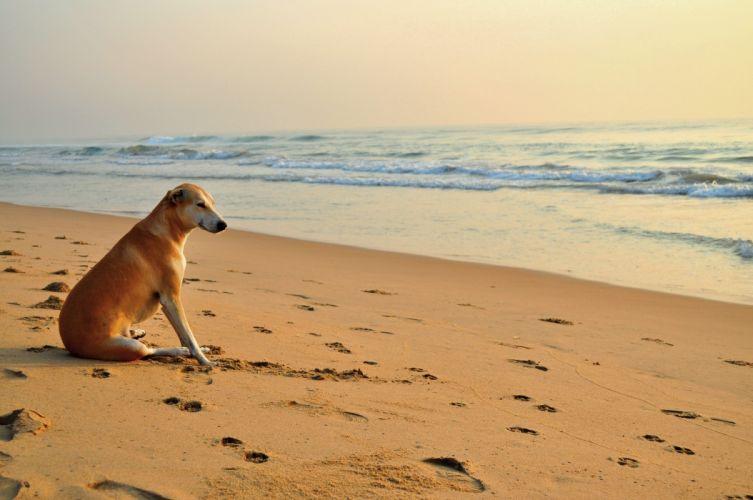 sea_ waves footprints beach dog sand mood wallpaper