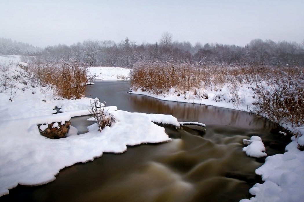 snow winter reeds river forest wallpaper