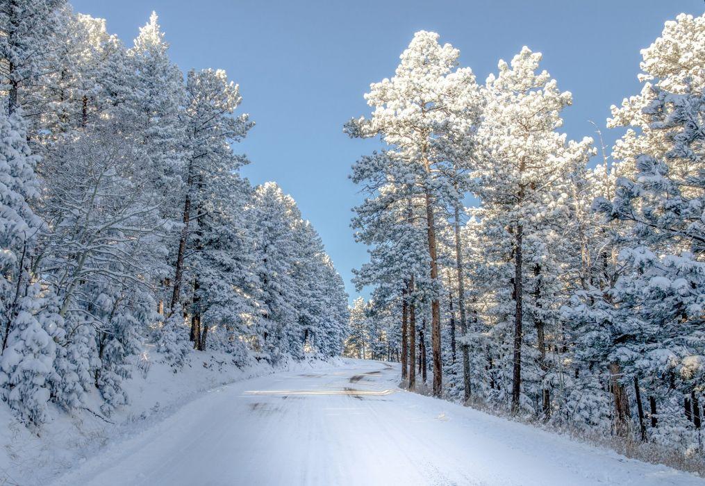 Snow Colorado Trees Winter Nature Wallpaper 2000x1379