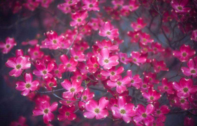 spring flowers beauty bloom blossoms bokeh wallpaper