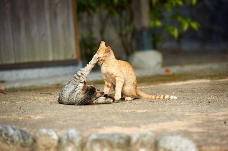 street game cats kitten wallpaper