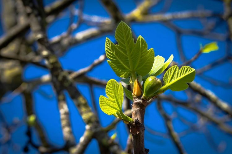 spring nature leaves tree wallpaper