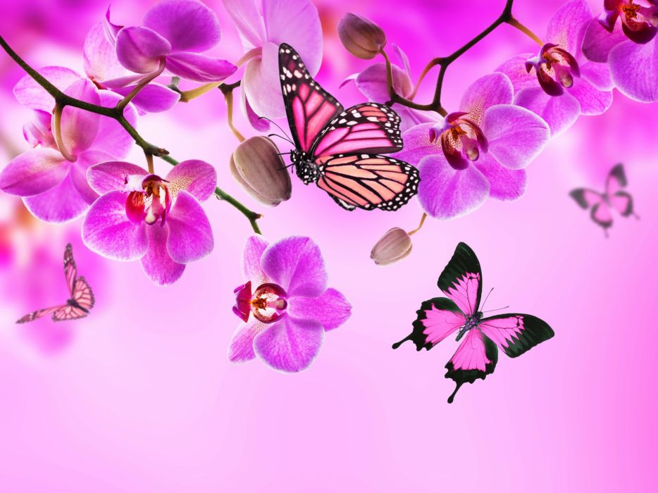 Orchid Butterflies Pink color Flowers wallpaper