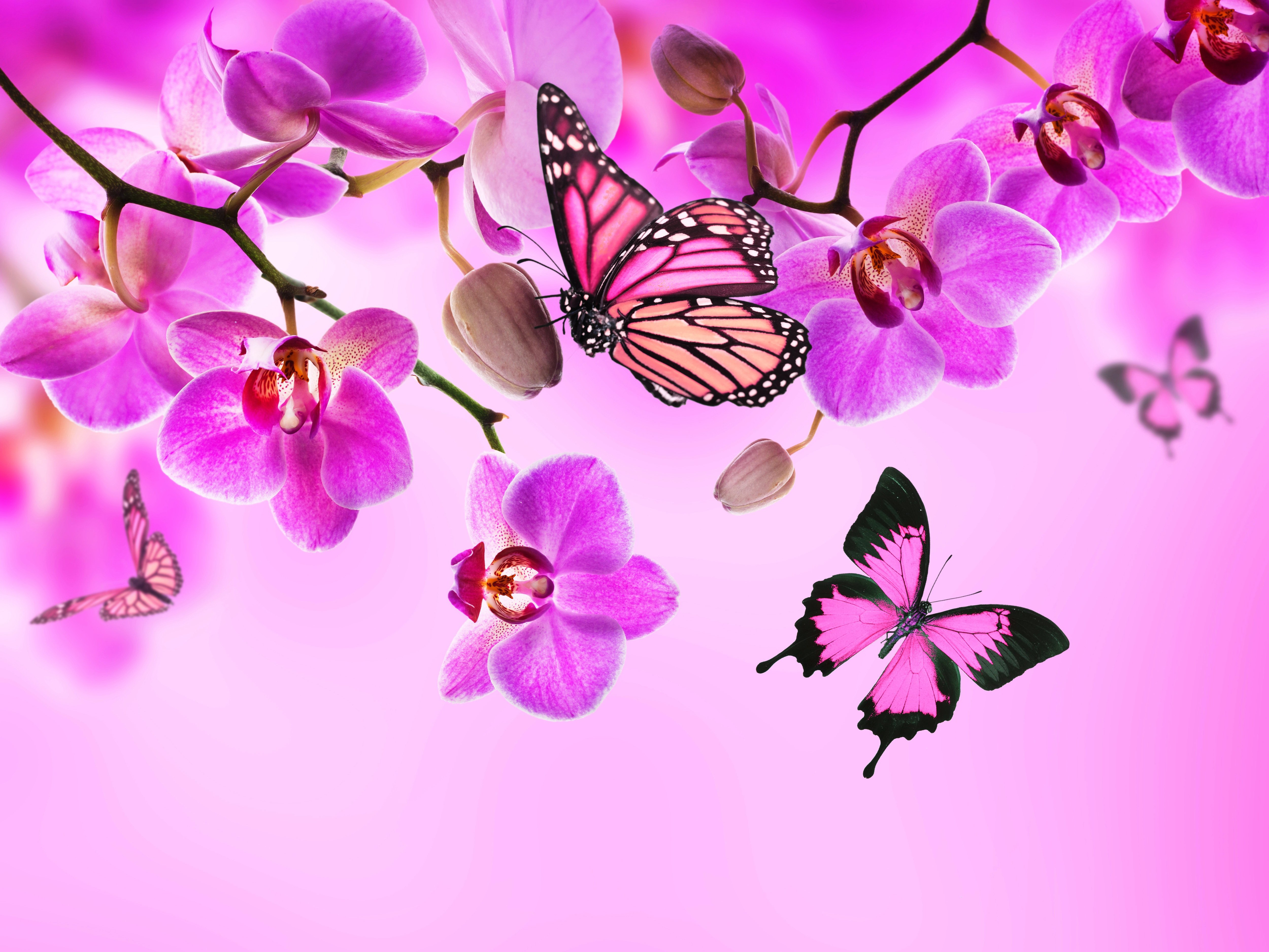 Orchid Butterflies Pink Color Flowers Wallpaper 5000x3750 336299