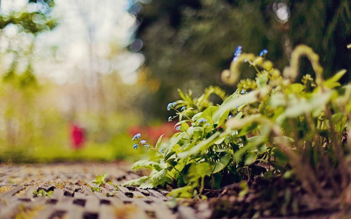nature leaves plants bokeh depth of field ground wallpaper