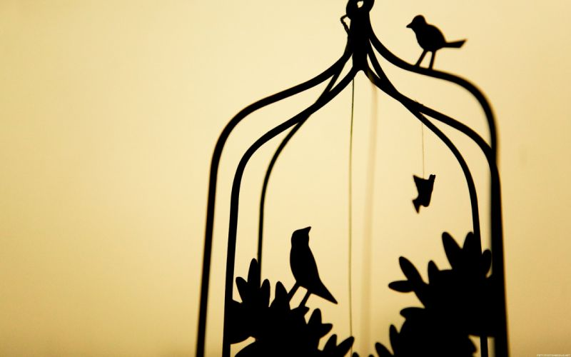 birds silhouettes cage simple background wallpaper