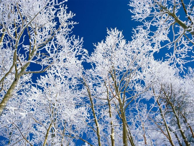 landscapes snow trees frost wallpaper