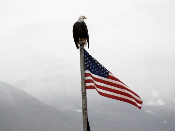 eagles flags USA wallpaper