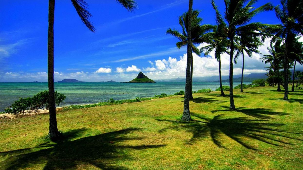 Hawaii palm trees hats Oahu wallpaper