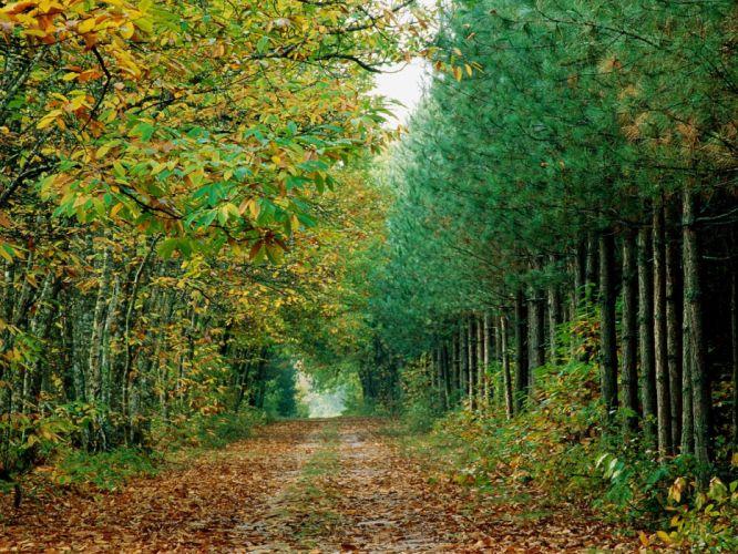 landscapes autumn forests roads wallpaper