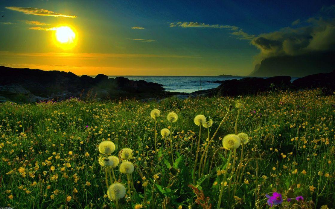 sunset landscapes nature dandelions wallpaper