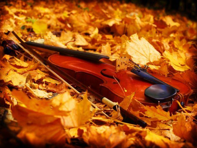 leaves violins fallen leaves wallpaper