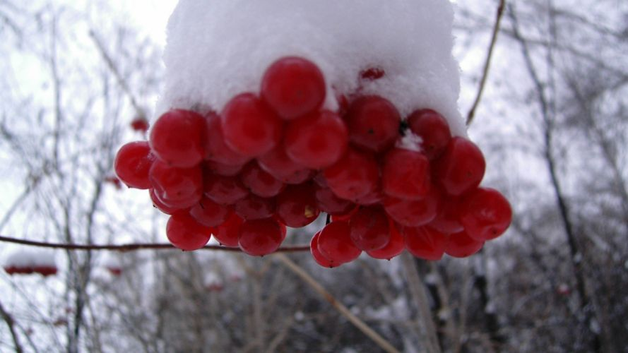 nature snow wallpaper