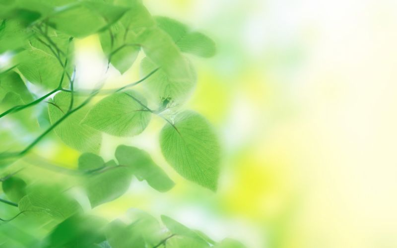 green nature leaves dreamy wallpaper