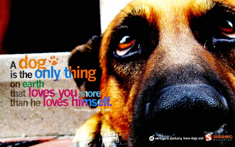 text animals quotes dogs wallpaper