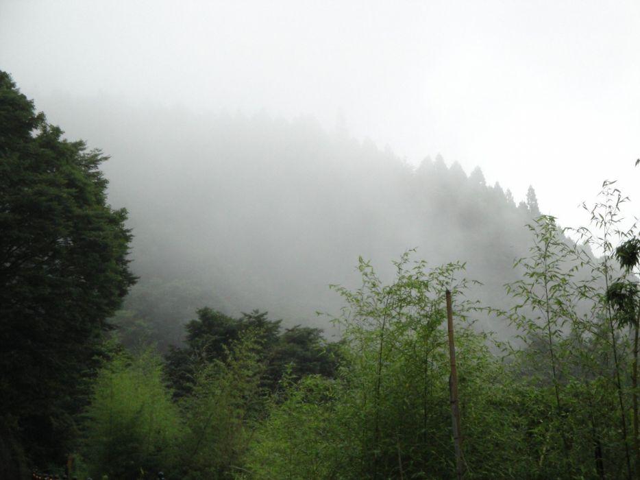 landscapes nature forests summer fog wallpaper
