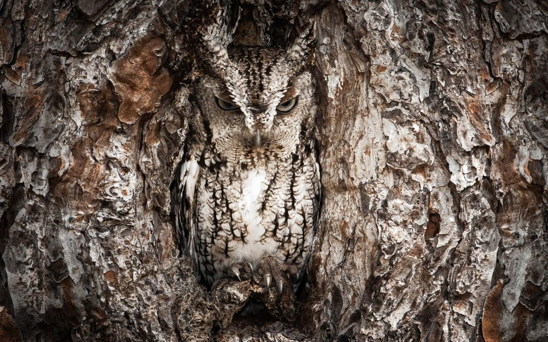 trees owls camouflage wallpaper