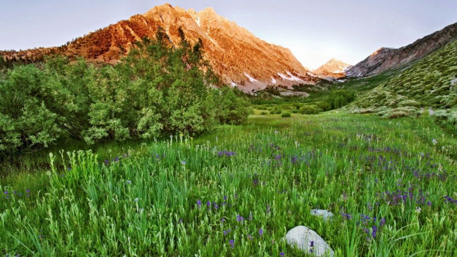 landscapes nature meadows California land wildflowers wallpaper