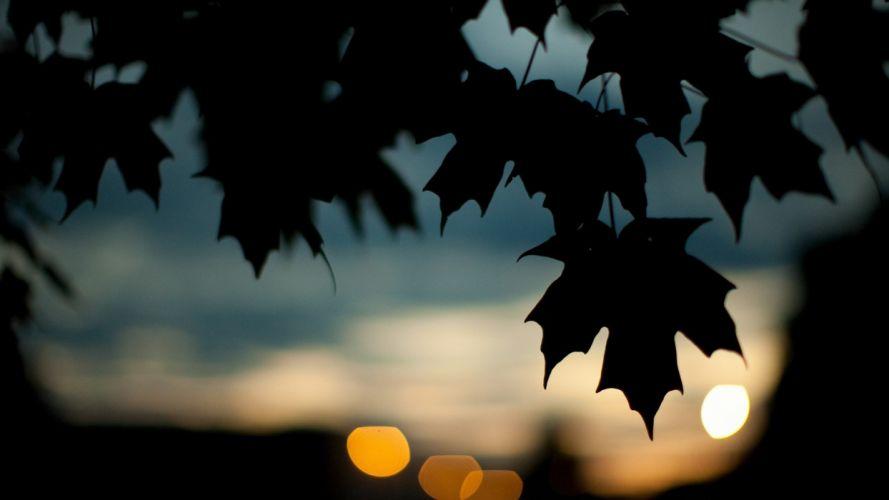 nature trees leaves silhouettes bokeh wallpaper