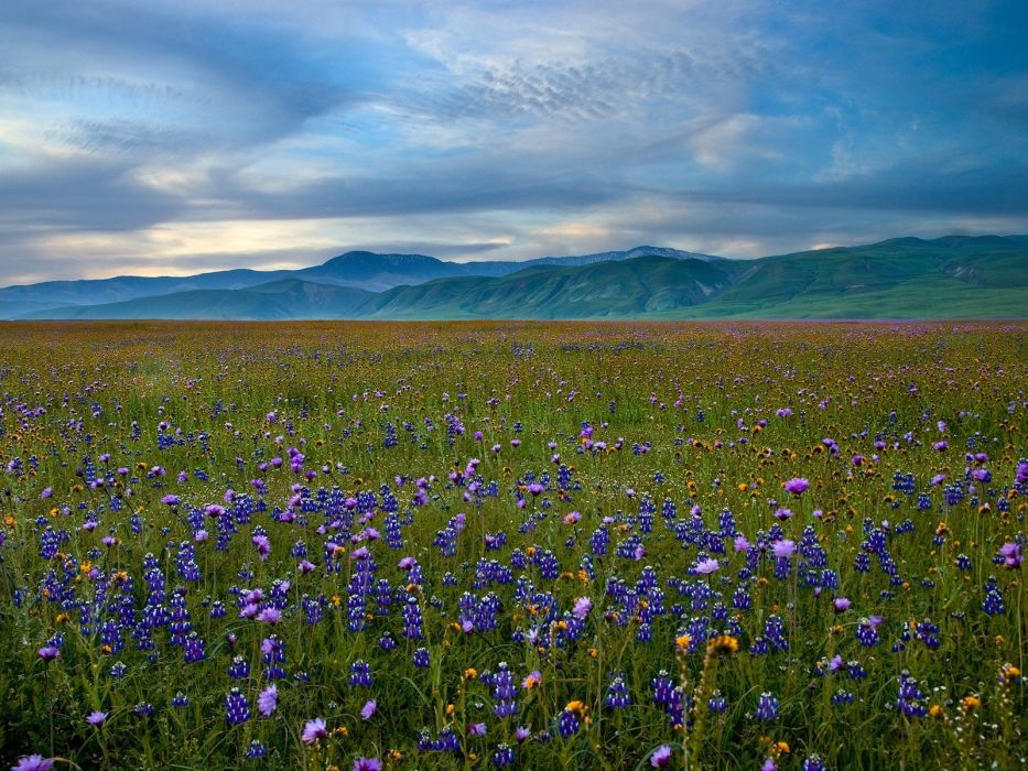mountains landscapes nature meadows California blue flowers wildflowers wallpaper