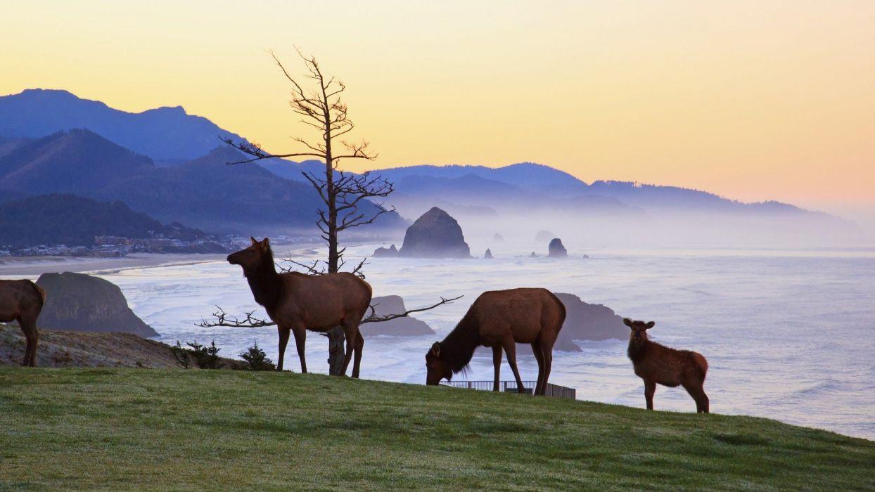 sunrise animals rocks Oregon parks elk state wallpaper