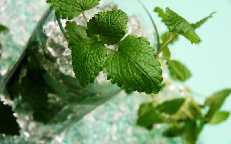 ice mint drinks mojito Rum wallpaper