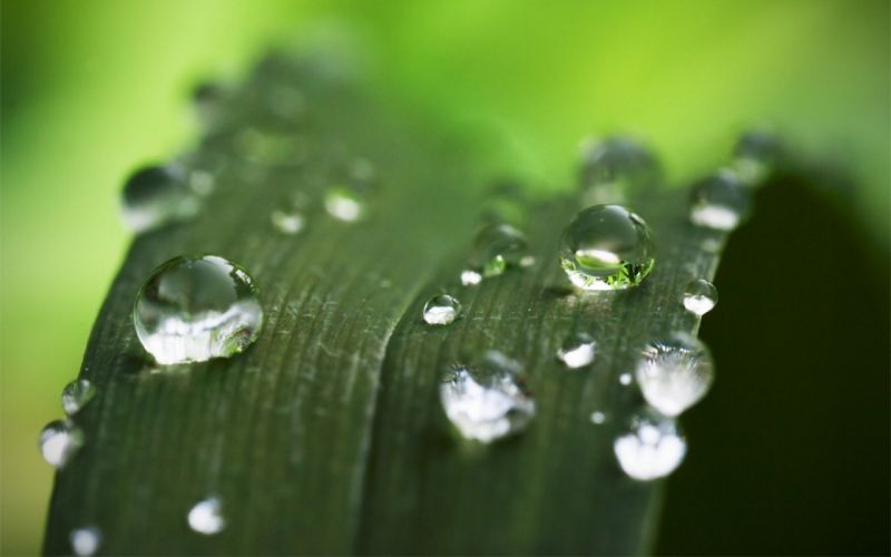 green nature plants water drops depth of field wallpaper
