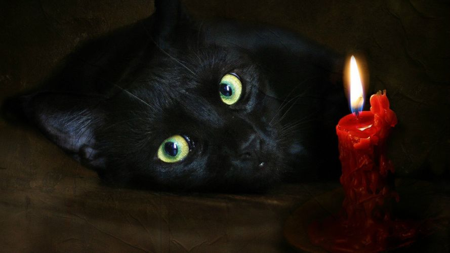cats scenic candles wallpaper