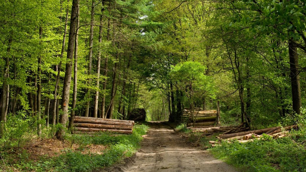 Woodcutting forestpath wallpaper