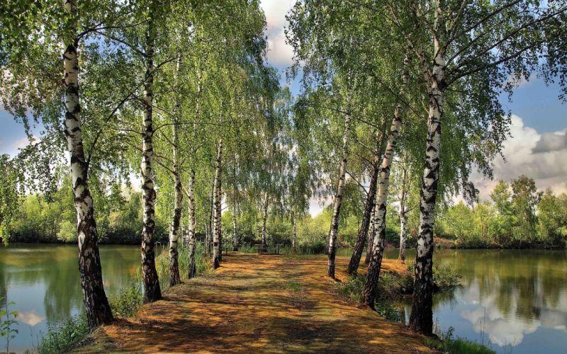 Birchtrees path through lake wallpaper