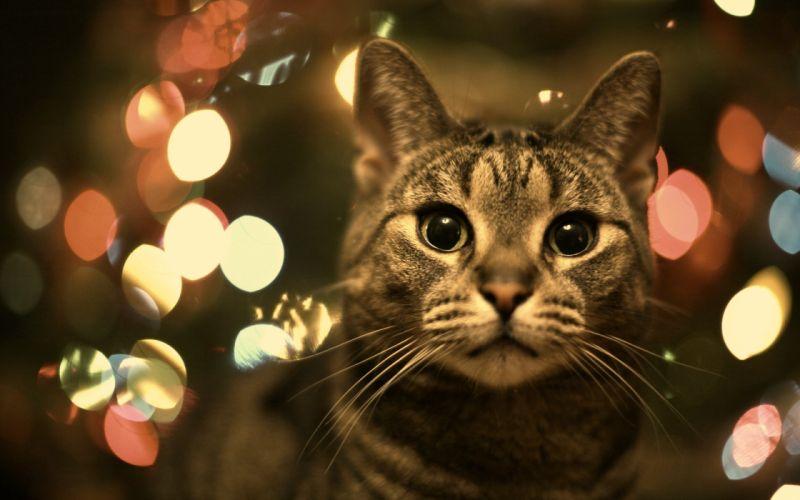 cats animals wallpaper