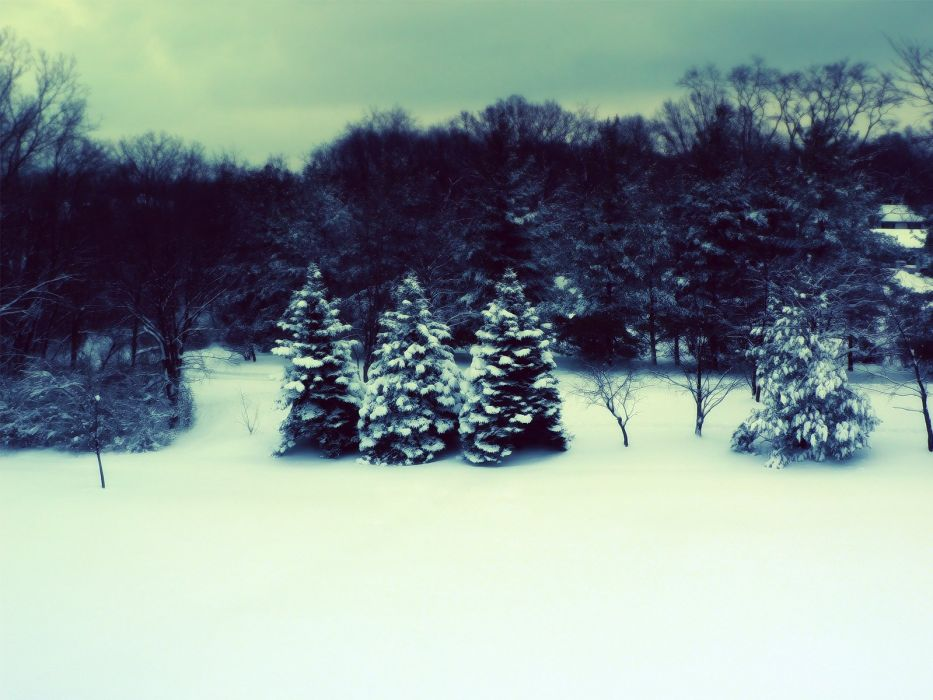 winter snow trees snow landscapes wallpaper
