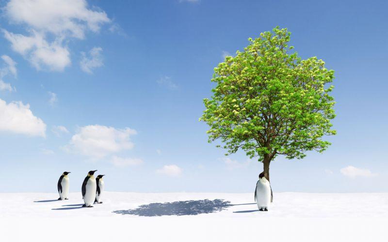 trees penguins wallpaper