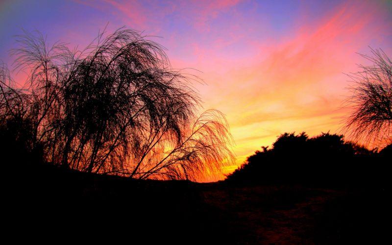 sunset trees wallpaper