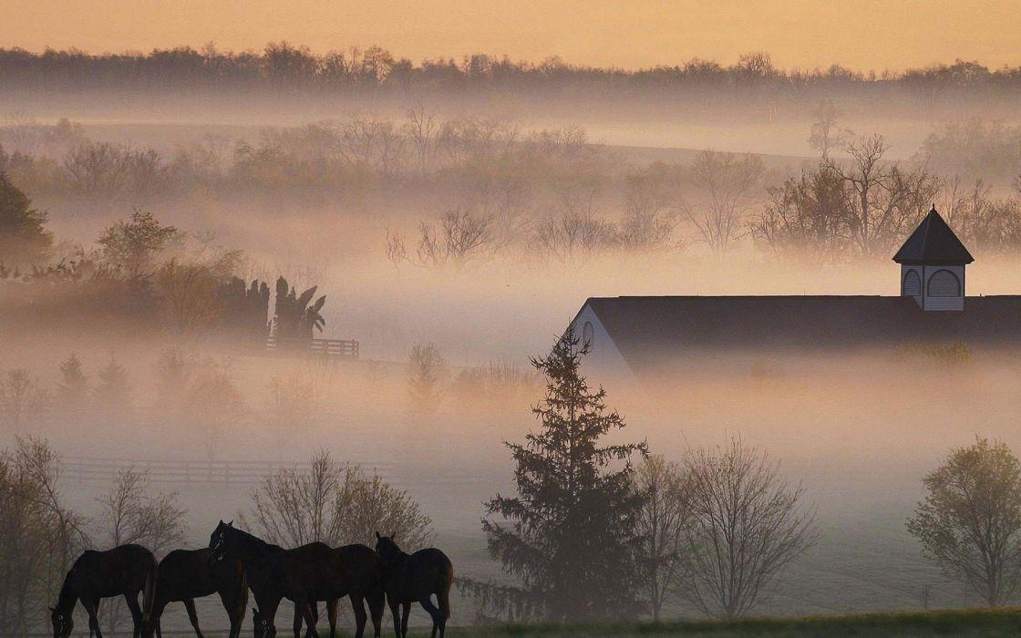 landscapes trees fog horses barn wallpaper