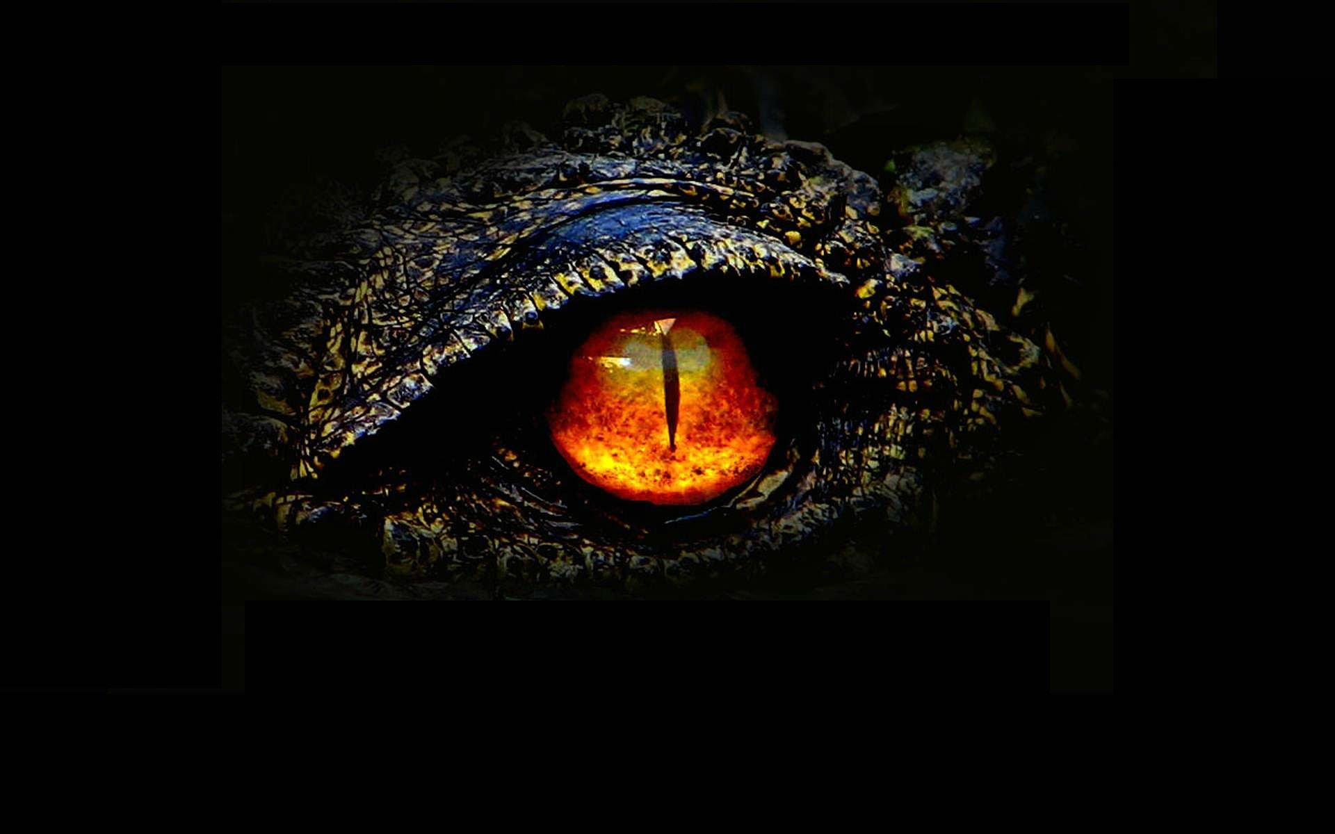 action adventure sci fi fantasy monster dinosaur horror 47 wallpaper