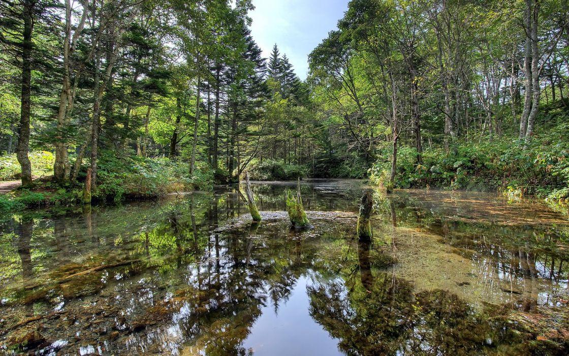 Lake reflection trees wallpaper