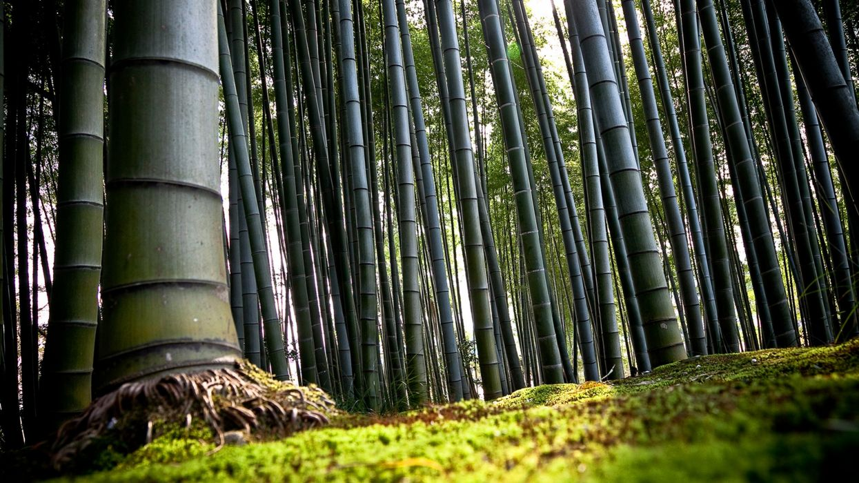 3d-abstract wallpaper bamboo lanscape forest 4000x2250 wallpaper