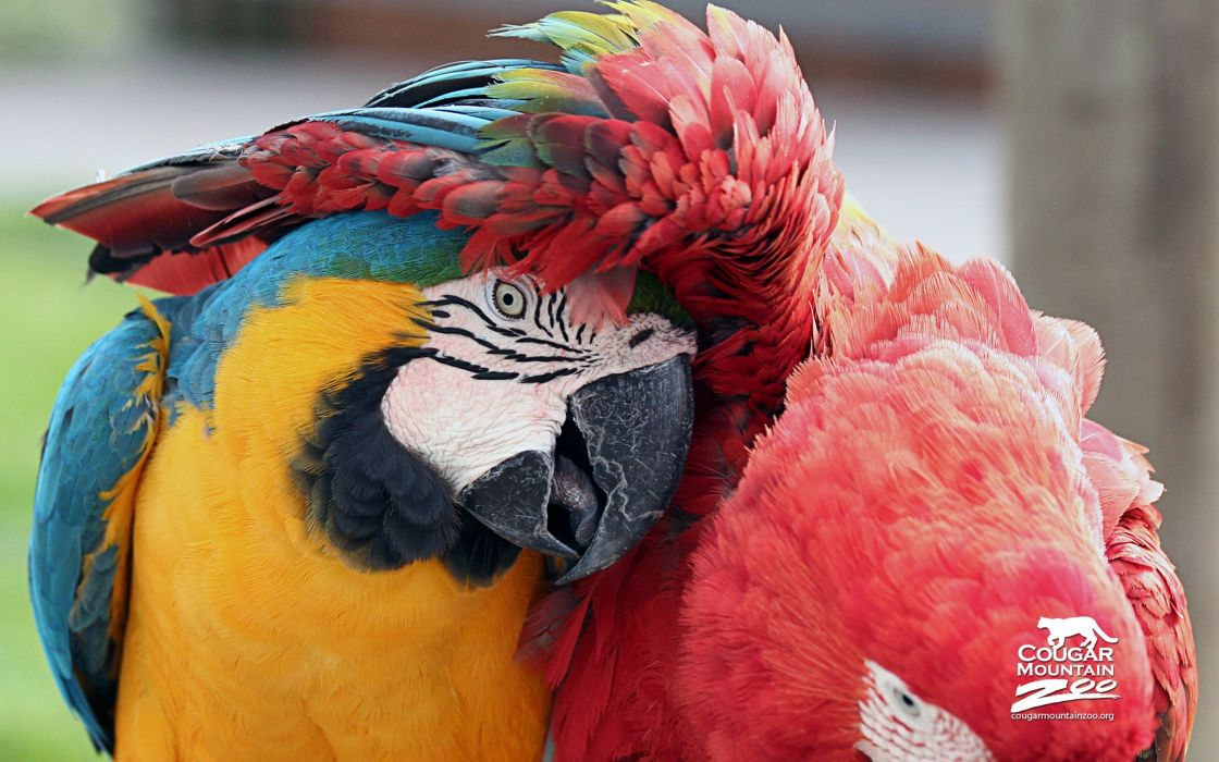 best-friends birds macaws 4000x2500 wallpaper