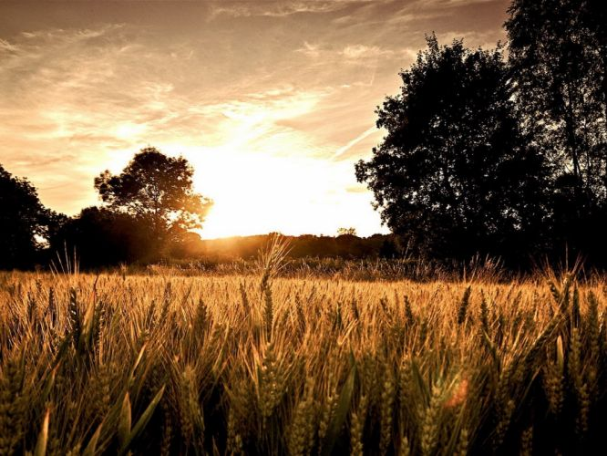 landscapes nature trees fields wallpaper