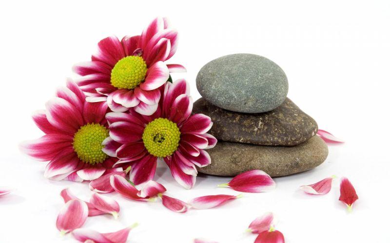 flowers stones pebbles wallpaper